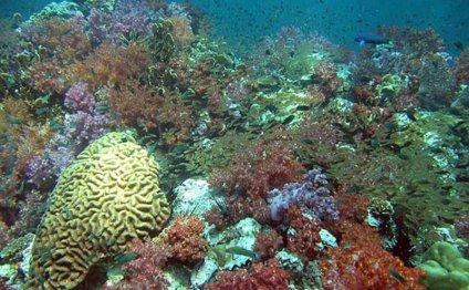 Коралловый остров, фото
