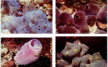 Известно около 5 тыс. видов